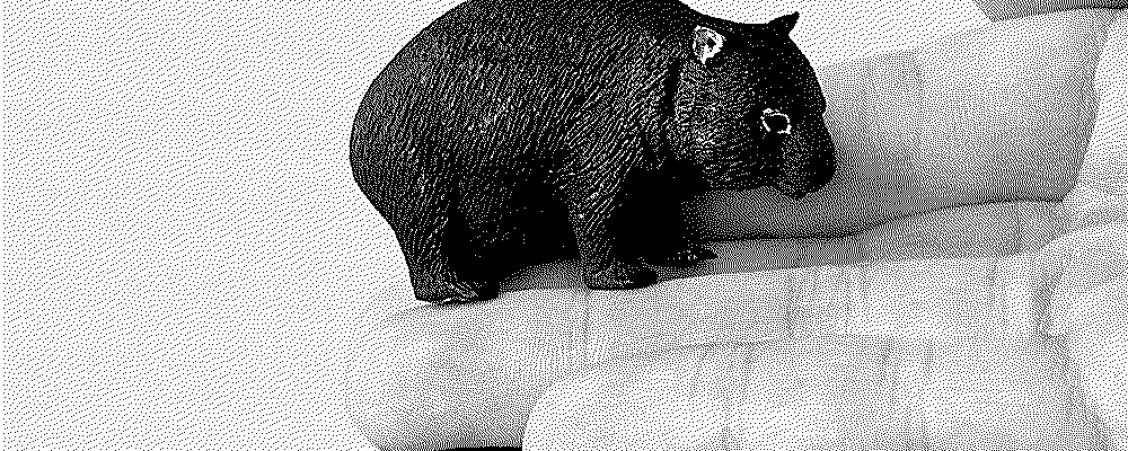 La cosmologie fécale chez le  wombat